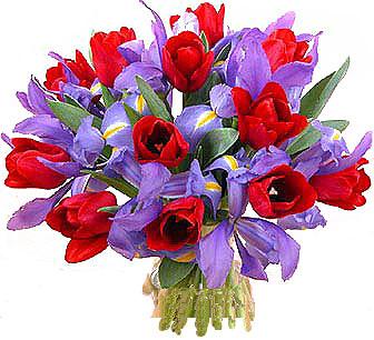 http://www.flamingo.ru/2images/prBIG_m06.jpg